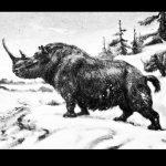 wolharige neushoorn