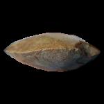 PPV-00752